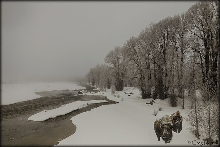 Winter along the Gros Ventre River in the Tetons